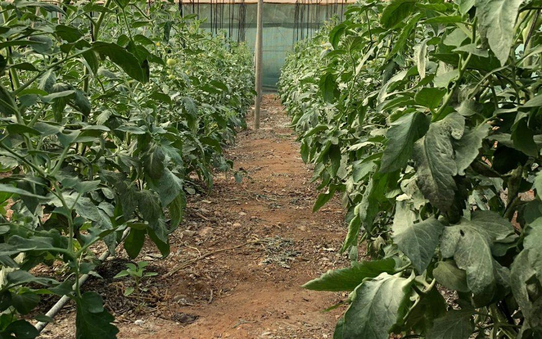 Cultivo ecologico con Flexitanq