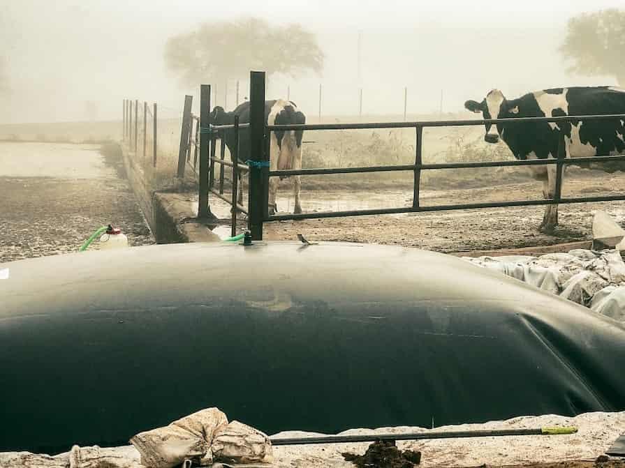 Purines almacenados en granja de vacuno en deposito cerrado.